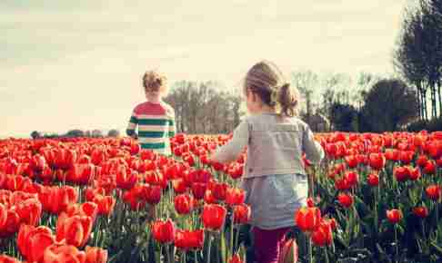 チューリップと女の子